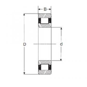 55 mm x 100 mm x 21 mm  SIGMA N 211 cylindrical roller bearings